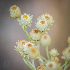 #flower #flowerstagram #flowers #autumn #pretty #macro #macrophotography #macroflowers #lovely_flowergarden