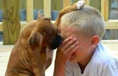 34 Ideas For Dogs Boxer Funny Animals Animals For Kids, Animals And Pets, Funny Animals, Cute Animals, I Love Dogs, Cute Dogs, Best Friends Funny, True Friends, Loyal Friends