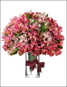 """Peruvian Lilies  A peace of art,a perfect """"pick-me-up"""" gift for any warm occasion. Our peruvian lilies consists of 20 stems(multiple blooms per stem),standing like a sculpture in a long classy vase.Really the right decision which man can ever make."""