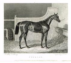 "Ackermann's Sporting Magazine - HORSES - ""CYPRIAN"" - Steel Engraving - c1838"