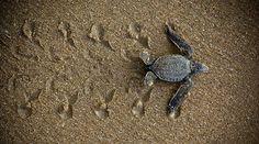 Protect sea turtles!  I love them:)
