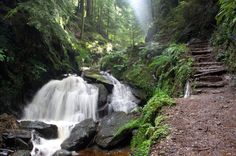 Puck's Glen, near Dunoon, in the west of Scotland. The tumbling, rocky burn that runs through the glen is criss-crossed by pretty wooden bridges, giving it a Lord of the Rings-style charm.
