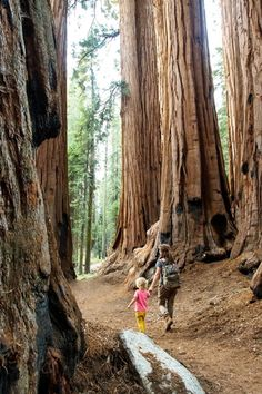 The best tent and RV camping sites in Kings Canyon and Sequoia National Park. Restrictions, pet policy, dump stations, how to find free camping nearby. Cold Springs Campground, Sunset Campground, Giant Sequoia National Monument, Giant Sequoia Trees, Kayak Camping, Camping Spots, Camping Hammock, Campsite, National Park Camping