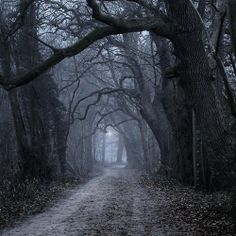 Reminds me of Sleepy Hollow