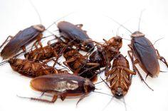 Pest Control Contract Singapore