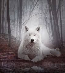 Resultado de imagem para raposas lobos e cachorros