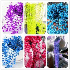 Multi-Color Ocean Pearls Succulents - 200 seeds Succulent Seeds, Rare Succulents, Sugar Beads, Seed Shop, Aari Embroidery, String Of Pearls, Pearl Color, Indoor Plants, Perennials