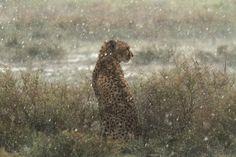 Heavy rain by tiziano cei
