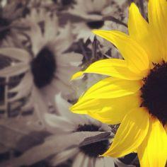 #nature #sunflower #macro #plants #flowers #yellow #promoterealpics #promoterealpictures #bestpicoftheday #colourpop #macromania