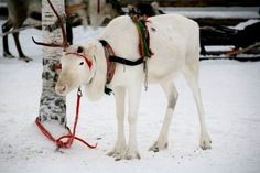 Visiting the Santa in Rovaniemi, Finland