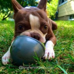 Boston with ball