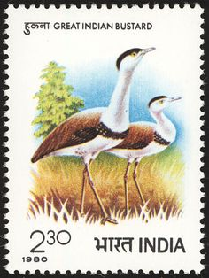 great indian bustard stamps mainly images gallery format