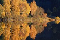 autumn reflection by Udo Dittmann