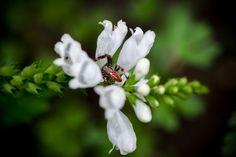 Beautiful nature #nature #macro #spider
