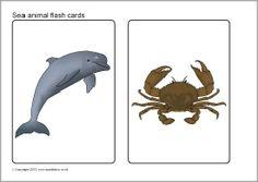 Sea animals picture flash cards (SB7810) - SparkleBox