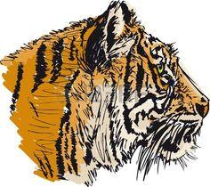 Эскиз белый тигр. иллюстрация photo