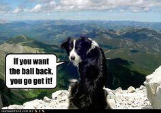 Fetch it yourself!!!