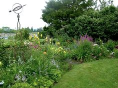 yellow daylily landscaping ideas | ... yellow KniphofiaVanilla, Thalictrum Elin (tall plant in the background