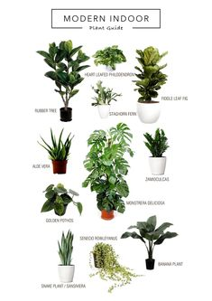 Un buen catálogo de plantas de interior The Effective Pictures We Offer You About house plants decor ladder A quality picture can tell you many things. You can find the most beautiful pictures that ca Cat Plants, Garden Plants, Plants Toxic To Cats, Poisonous Plants, Succulent Plants, Medicinal Plants, Vegetable Garden, Best Indoor Plants, Indoor House Plants
