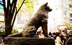 Những người bạn của Sky+: Chó Hachiko - biểu tượng về lòng trung thành của N...