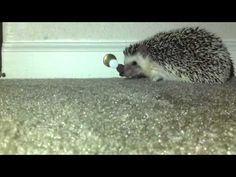 So you're Hazel The Hedgie, just crawlin' along, and all of a sudden there's this little springy thing sticking out of the wall.