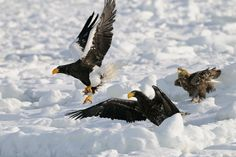 To Late by Harry  Eggens on 500px