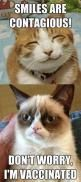 Grumpy Cat is vaccinated .. LOL so weird reminds me of my sister who dosnt smile: Funny Grumpy Cat Meme, Pet Meme, Same Animal, Sister Meme, Funny Meme, Hilarious Meme, Grumpy Meme, Even Humor, Funny Cat Meme