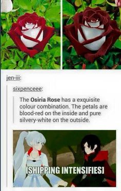 DUDE I FUCKING LOVE IT[SHIPPING INTENSIFIES] WHITE ROSE //'NOoooOoo make it stOooOop.. Pleas stahp yelling..
