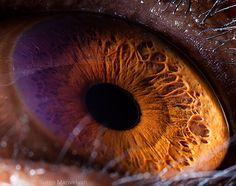 Micro photography of a chimpanzee iris by Suren  Manvelyan (so similar to the human iris)