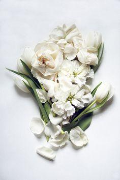 Flower Photography Modern Still Life of White Flowers Spring | #flowers #white_flowers