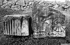 Arachne - Individual object 33946: Giebelblock mit Ranken und Eros - Rom, Via Appia