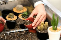 Como debe ser la tierra para sembrar cactus - como preparar tierra para cactus Orchid Cactus, Cactus Y Suculentas, Orchids, Home And Garden, Patio, Fruit, Green, Plants, Gardening