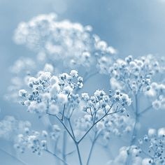 Color Azul Pastel Photograph by Hazed Baby Blue Aesthetic, Light Blue Aesthetic, Rainbow Aesthetic, Flower Wallpaper, Wallpaper Backgrounds, Baby Blue Wallpaper, Love Blue, Blue And White, Bleu Pale