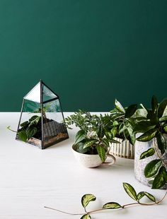 Create a mini indoor garden with our easy how-to, in partnership with Sheridan Australia.