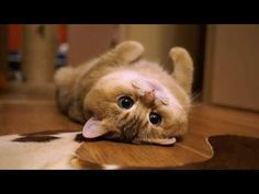 Small cat Hosico - 1 to 5 months - YouTube