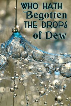 Job 38:28 Hath the rain a father? or who hath begotten the drops of dew?
