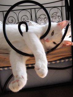 A Cat's Life - It's all too much, I just can't COPE.   Flickr