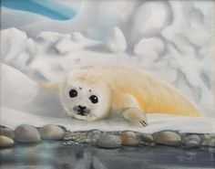"""Baby Harp Seal"", (Jan's baby) 12"" x14"", pastel on rag board. HH2013"