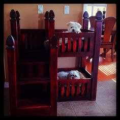 Totally getting a Dog Bunk Bed for my dogs