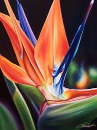 """Résultat de recherche d'images pour """"fleurs exotiques aquarelle"""""""