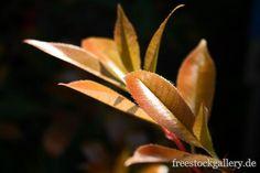 pflanzen Blätter - freestockgallery.de