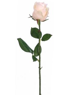 Pastel Peach Pink Rose Bud | Pastel Flowers | Afloral.com $2.99