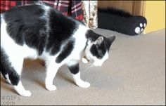 Tumblr: catsdogsblog: More Funny Cat Gifs here
