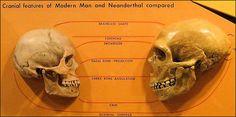 skulls compared