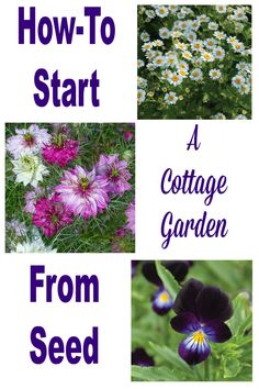 Start a cottage garden with self-seeding annuals and watch your garden come back year after year.  http://www.hometalk.com/l/03g