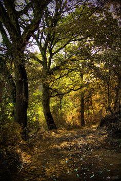 www.facebook.com/AnAssuncaoPhotography  | Let's take a stroll. #Covelas #Trofa #Portugal