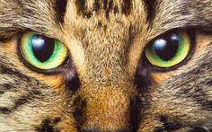 I love cats eyes