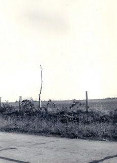 Telephone poles in Kansas, 1939