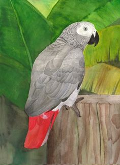 african parrots | African grey parrot by greencheek on deviantART