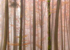 Orange Fog / Alexander S. Kunz